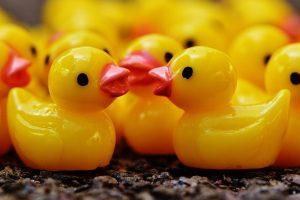 ducks-1339564_640